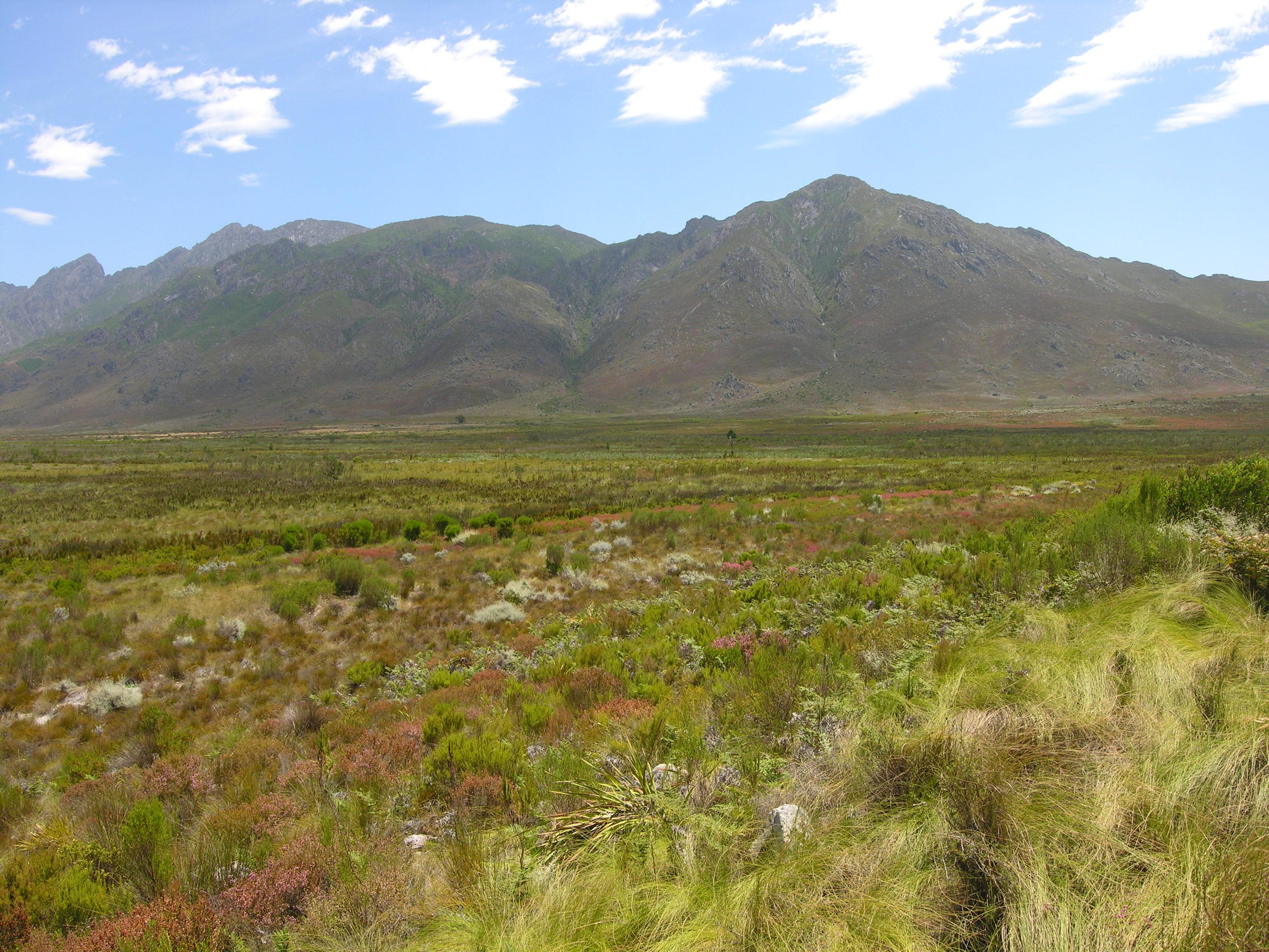File Fynbos Landscape 1