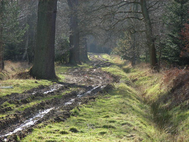 English: Cranbourne Chase. Part of the Crown E...