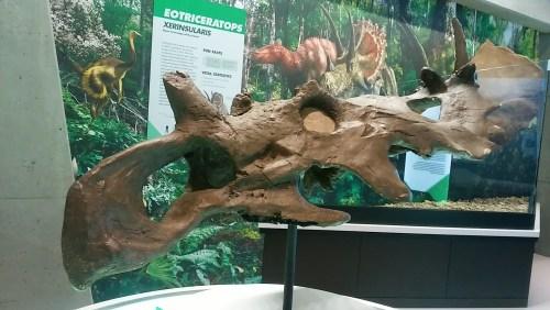 Coronosaurus brinkmani.jpg