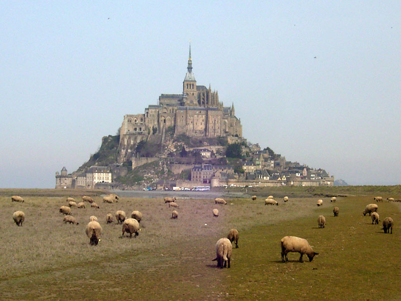 Schafe am Mont-Saint-Michel, Foto von JakobVoss, Lizenz:CC by SA/Creative Commons Attribution ShareAlike 2.0 Germany