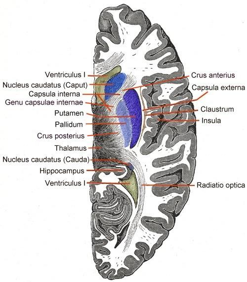 Extreme capsule - Wikipedia