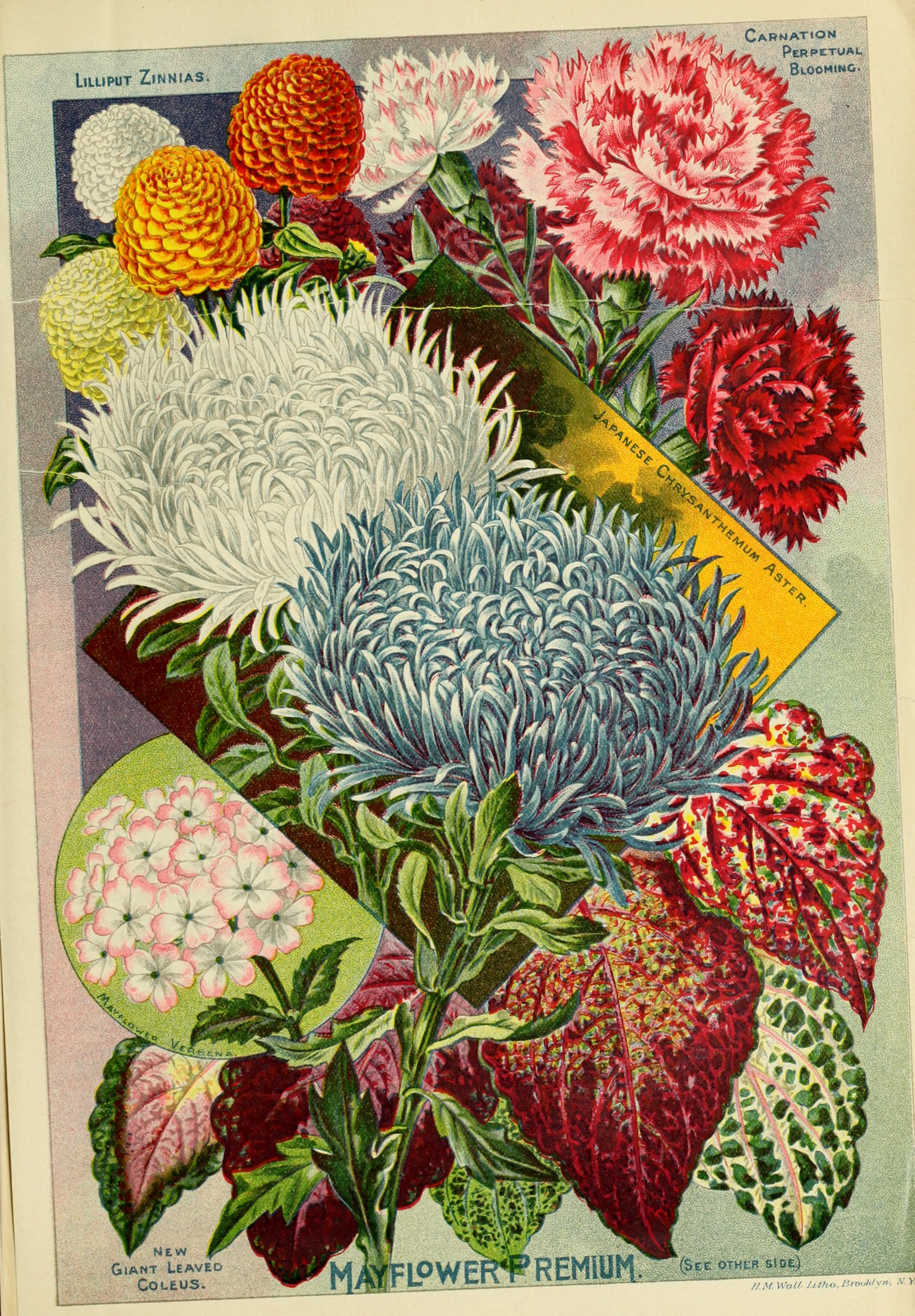 File Childs Rare Flowers Vegetables And Fruits