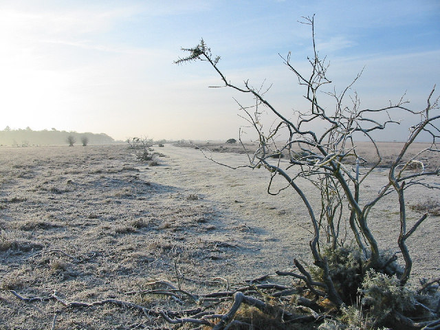 Disused road through heathland of New Forest - geograph.org.uk - 97376