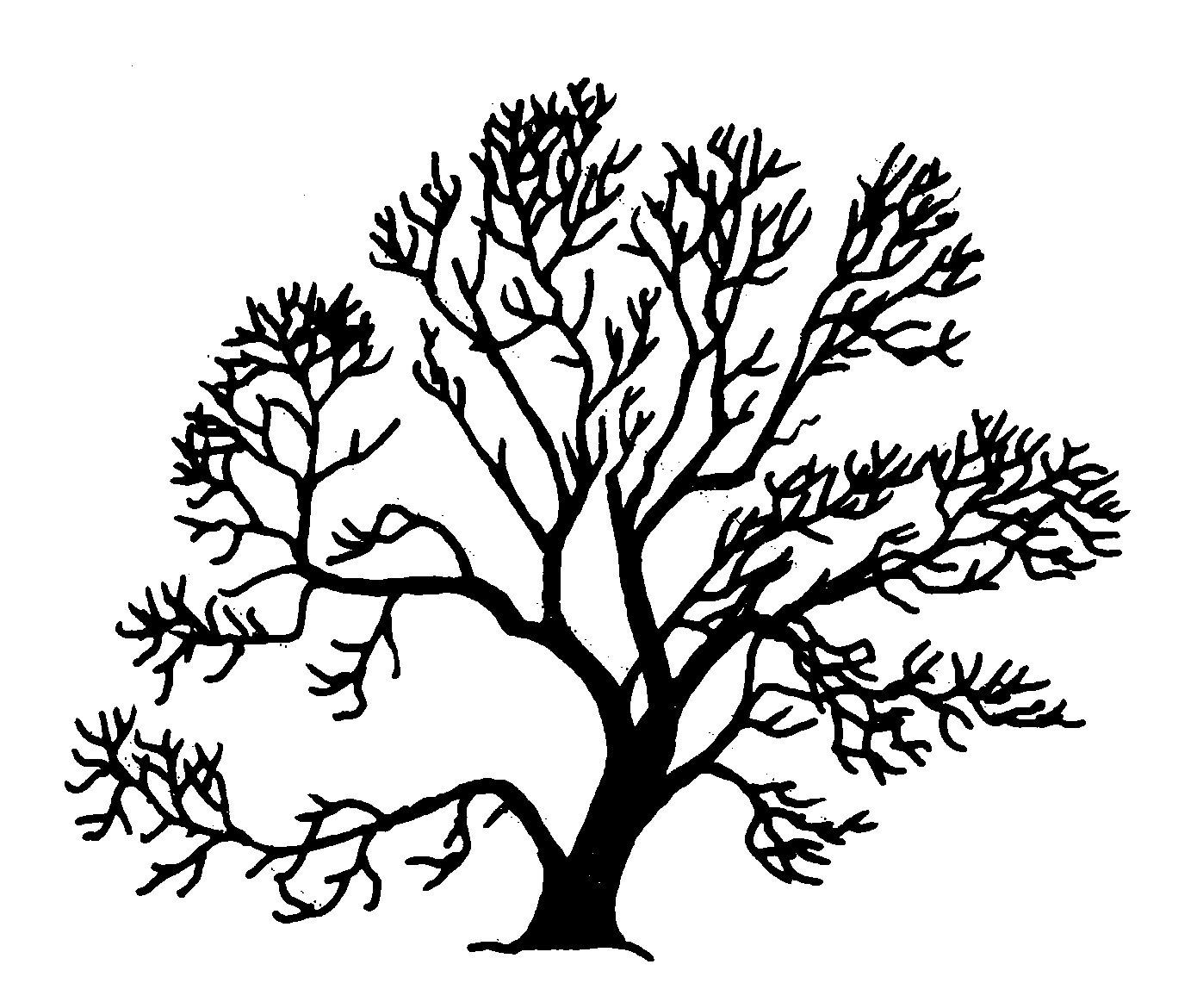 Plik Salix Fragilis Silhouette Oddsock Wikipedia