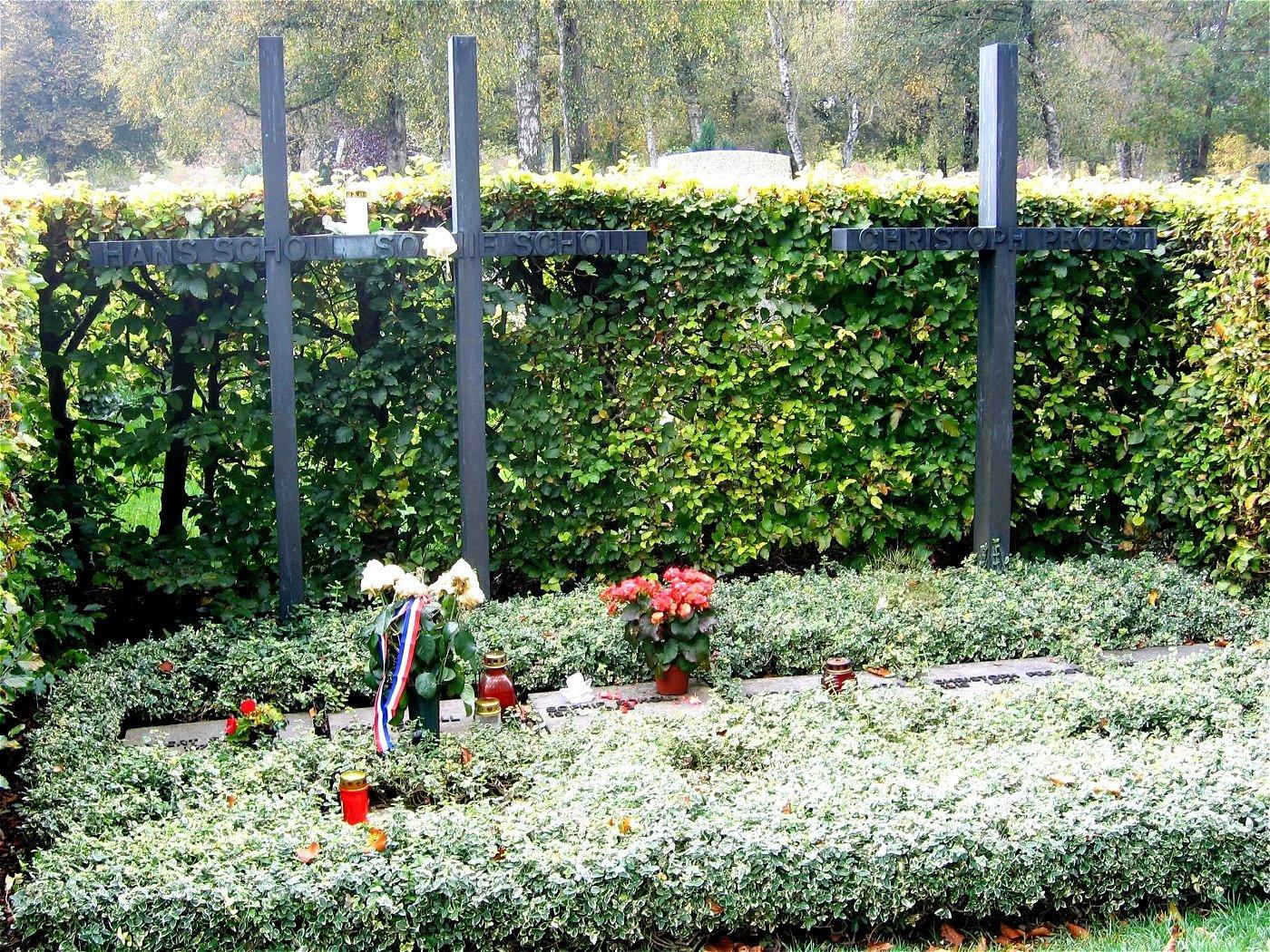 White Rose graves
