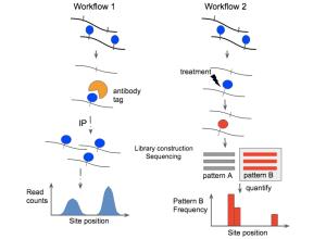 Epitranscriptomic sequencing  Wikipedia