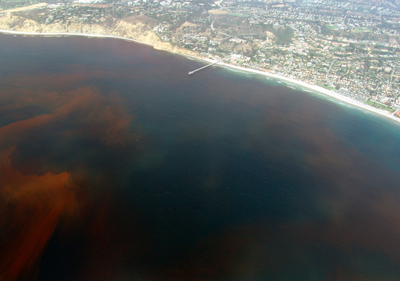 https://i1.wp.com/upload.wikimedia.org/wikipedia/commons/9/96/La-Jolla-Red-Tide.780.jpg