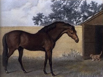 File:Godolphin Arabian.jpg