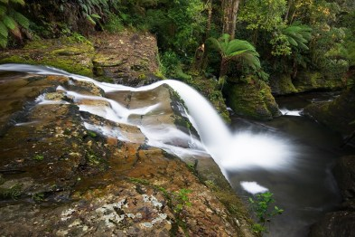 Image of the Spout Falls, Liffey, Tasmania