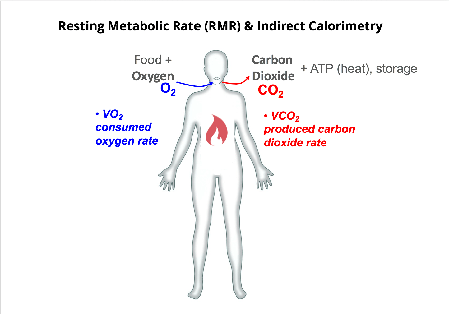 File Resting Metabolic Rate