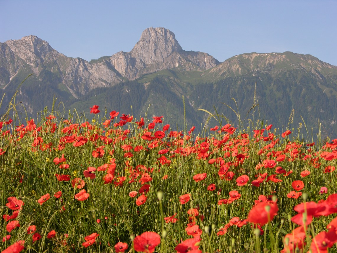 Stockhorn%2C Red Poppies Pretty Wallpapers For Iphone