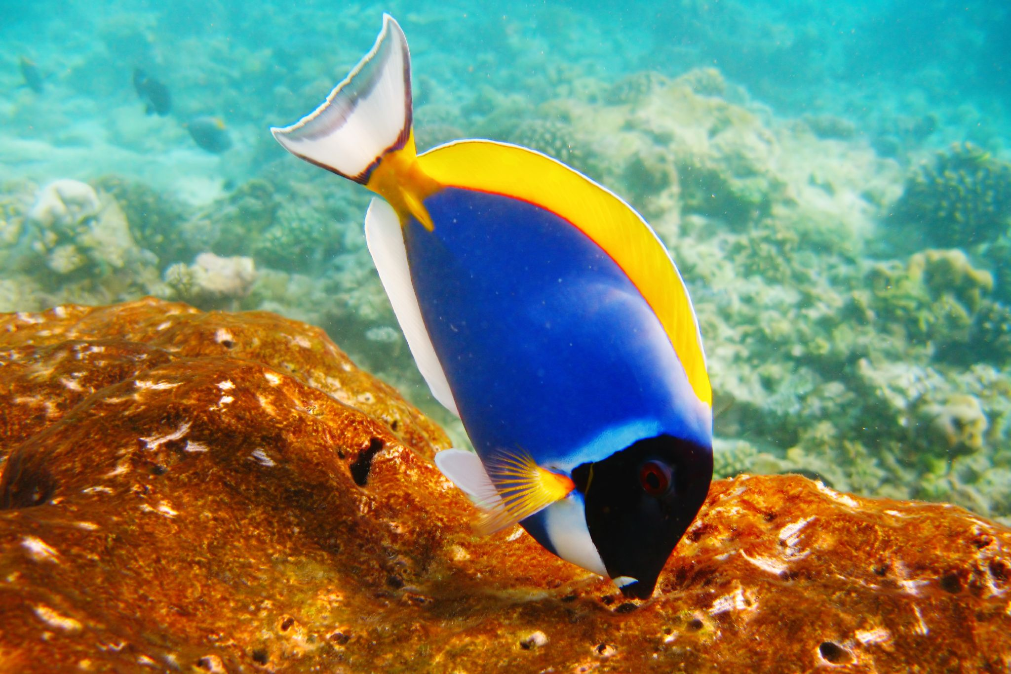 fish elizabeth bishop 1 Get an answer for 'what are two metaphors in the fish that contribute to the explication of the poem' and find homework help for other the fish questions at enotes.