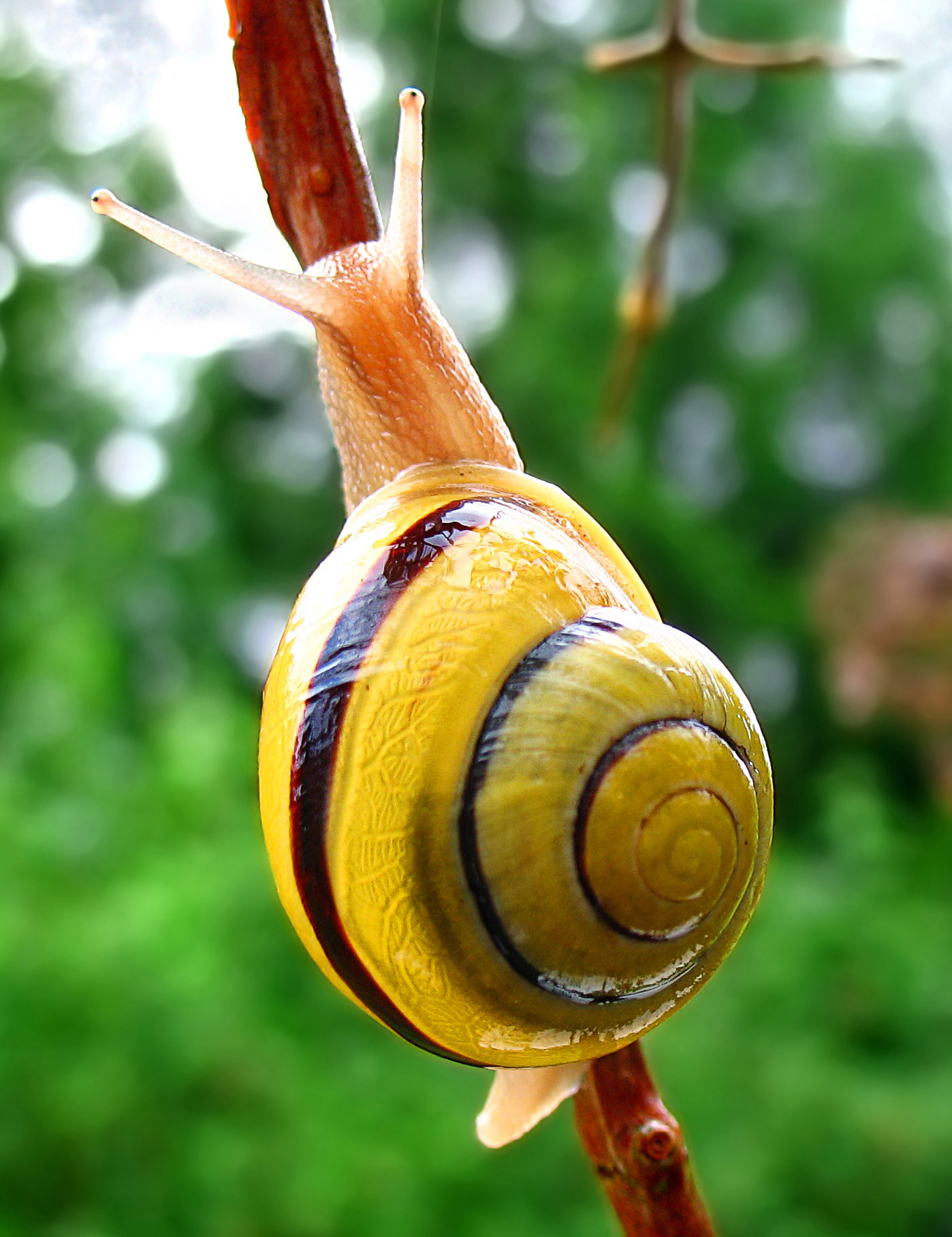 https://i1.wp.com/upload.wikimedia.org/wikipedia/commons/a/a1/Snail-WA_edit02.jpg