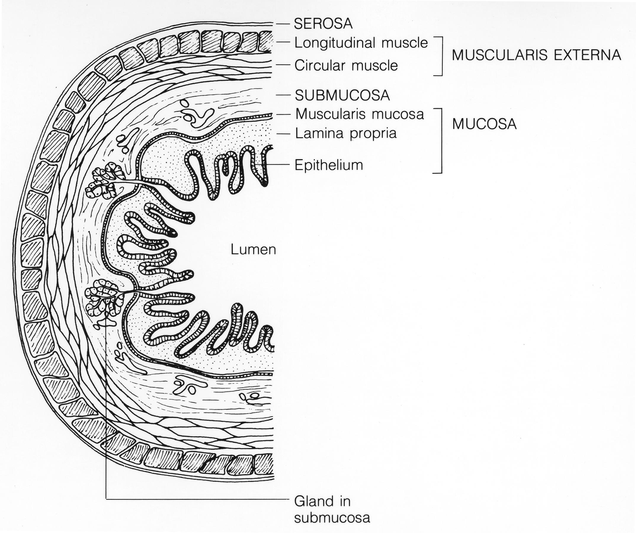 File Mucosa
