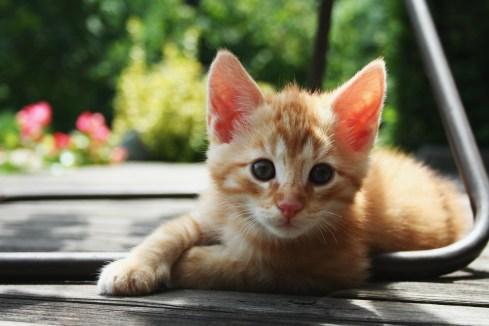 Risultati immagini per kittens