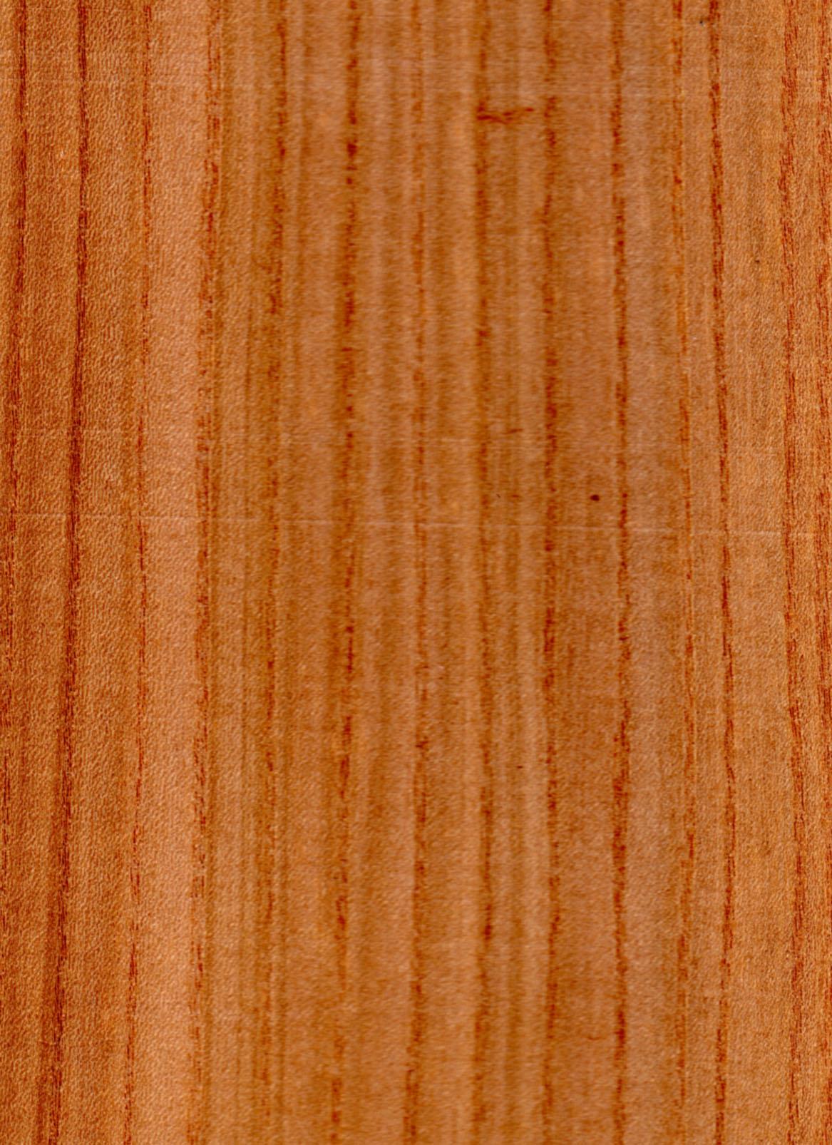 Legno Ulmus glabra.jpg