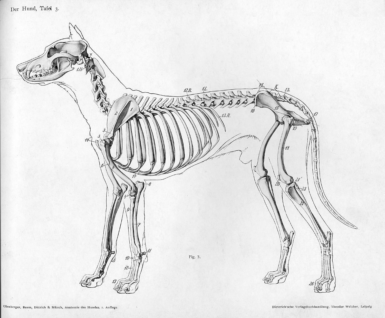 Bibliodyssey Handbook Of Animal Anatomy