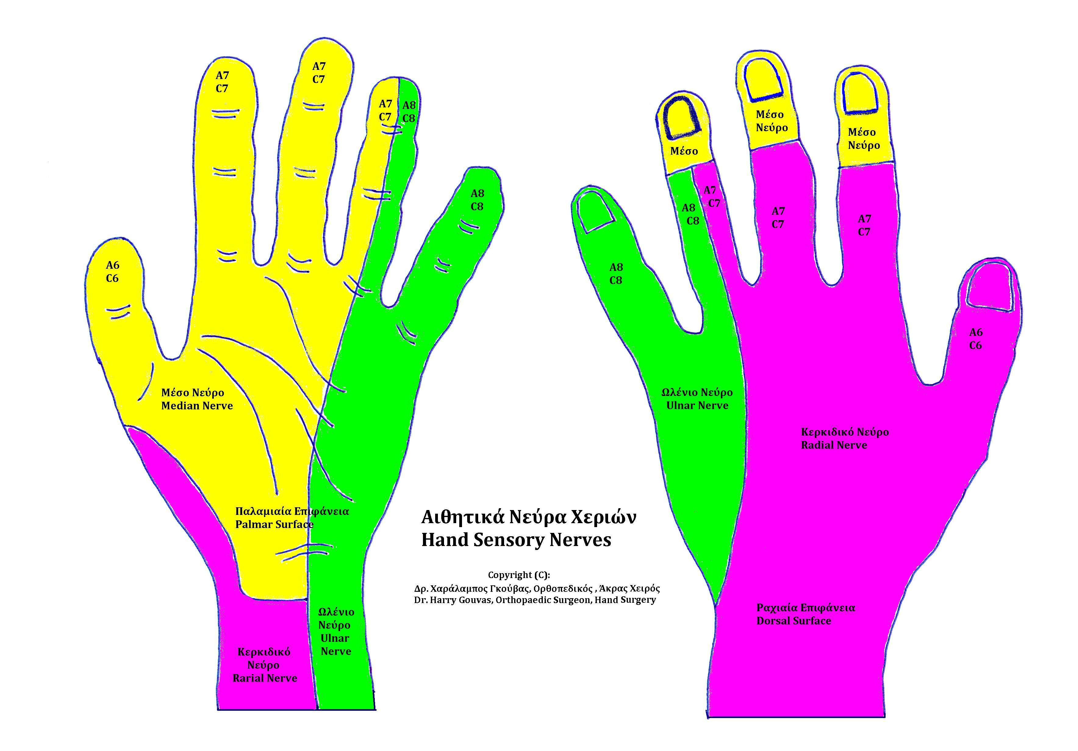 Hand Sensory Nerves