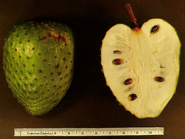 https://i1.wp.com/upload.wikimedia.org/wikipedia/commons/a/a8/Soursop_fruit.jpg