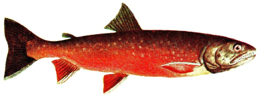 Salmon is a rich source of EPA.