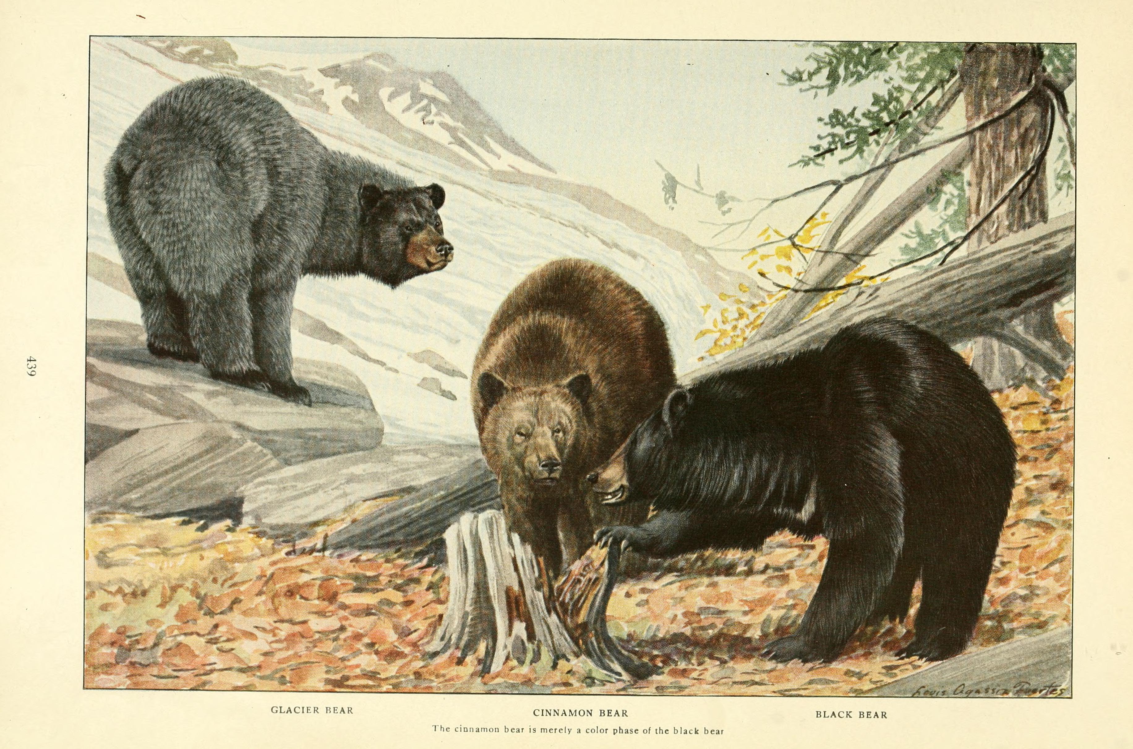 File Wild Animals Of North America Intimate Stu S Of