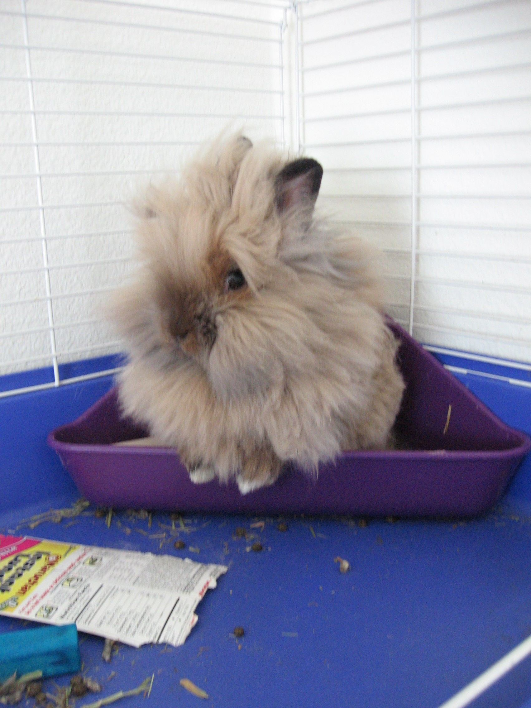 Rabbit in litter box. Image via Wikipedia.
