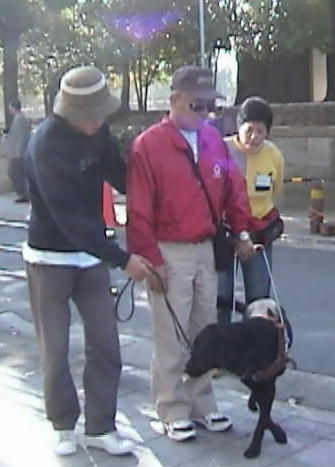 Guide Dog undergoing training - from WikiPedia