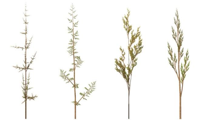 Fractal weeds - Rule based fractals