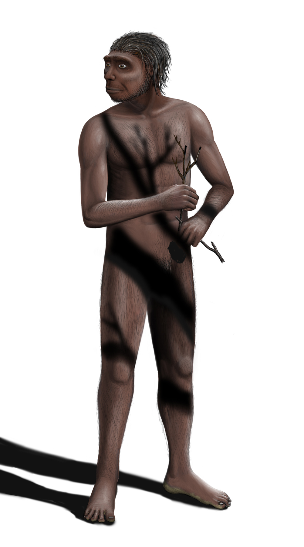 http://upload.wikimedia.org/wikipedia/commons/archive/a/af/20080521191715!Homo_erectus_Steveoc_86.jpg