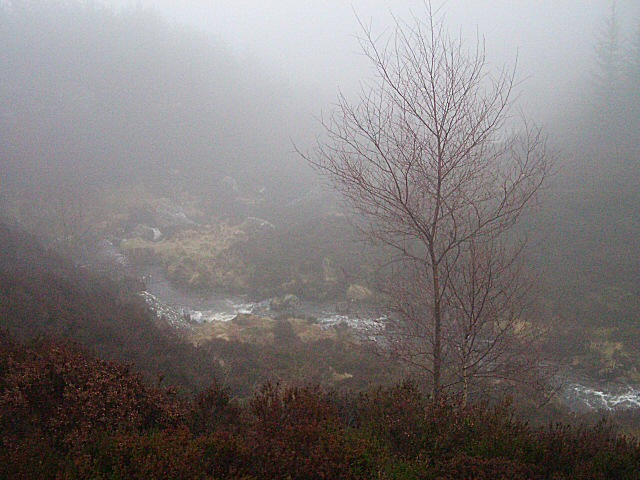File:Forest valley in mist - geograph.org.uk - 346599.jpg