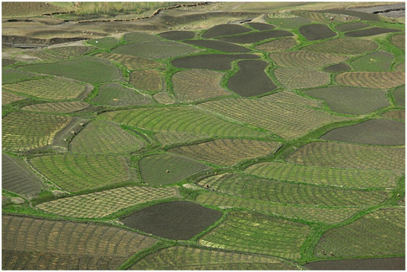 Image result for spiti agriculture
