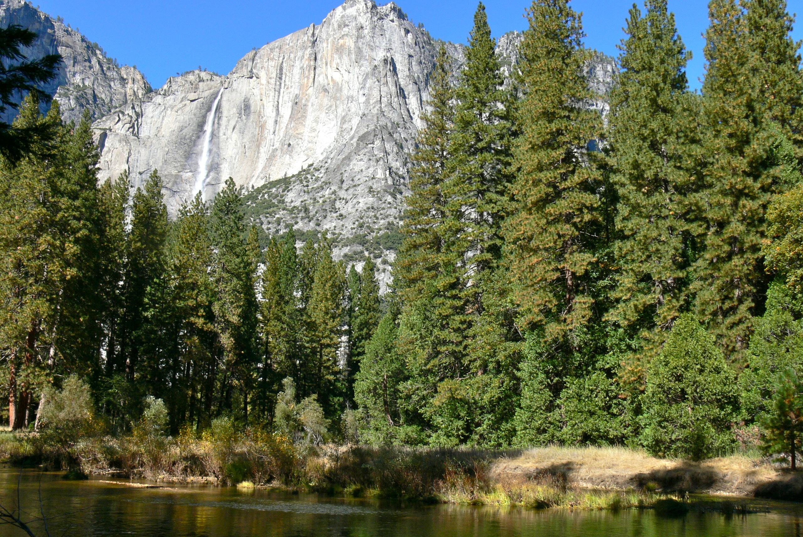 Grasslands and intervening rock faces support a variety of animals. Sierra Nevada Lower Montane Forest Wikipedia