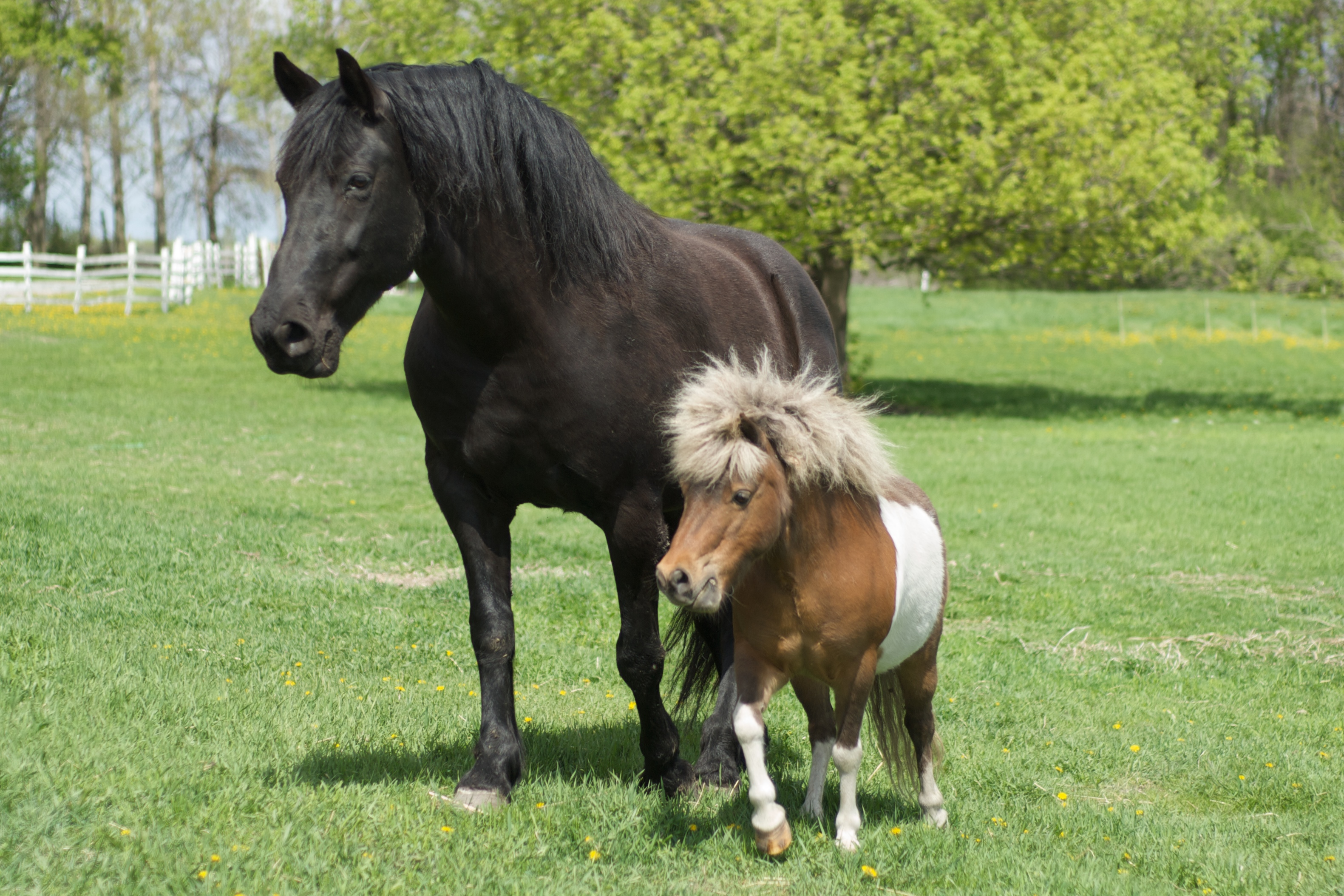 File Big Horse And Little Horse