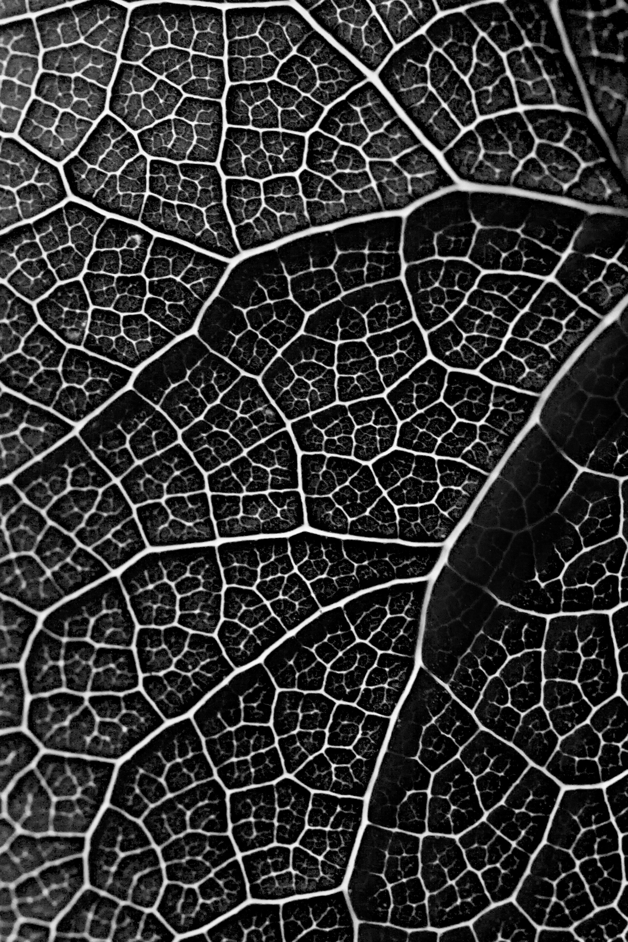File Leaf Pattern