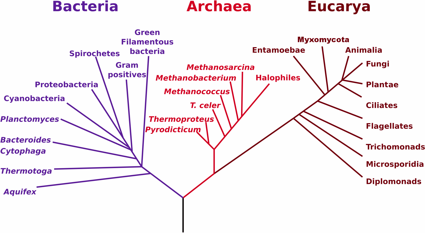 File Phylogenetictree