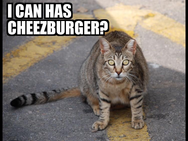 Has Cheezburger Can Original I Lolcat
