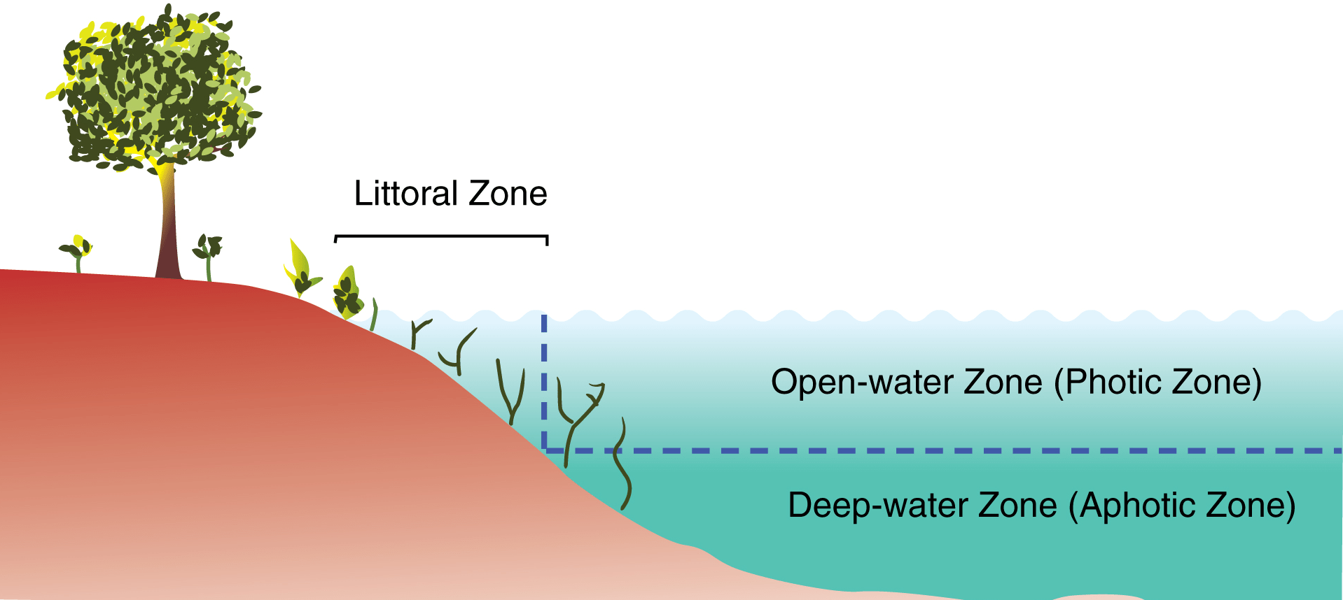 File Primary Zones Of A Lake