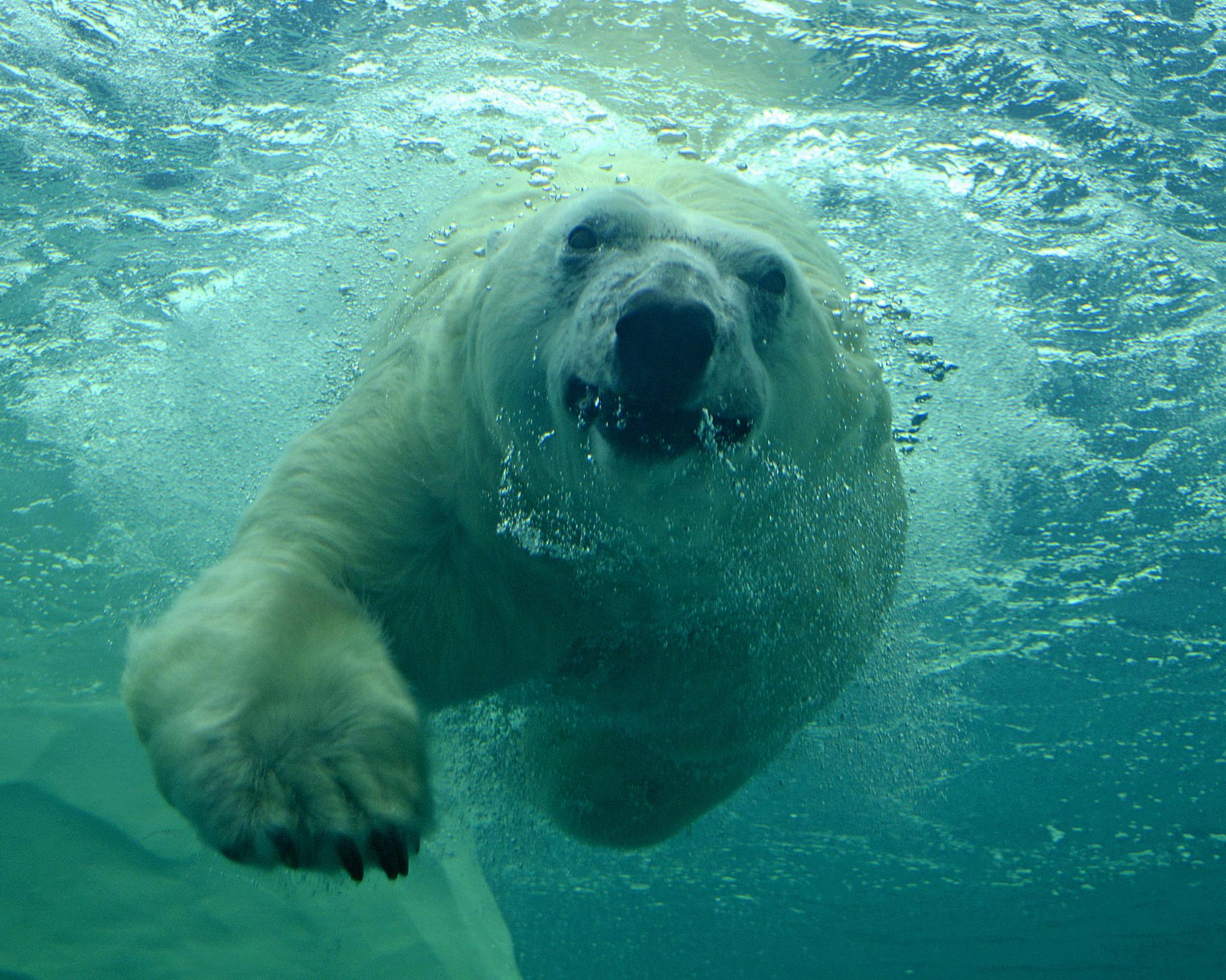 File Talini Swimming