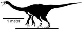 Erlikosaurus andrewsi.jpg