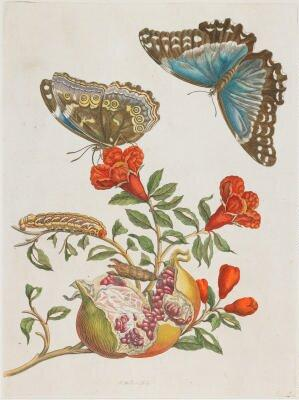 Joseph Mulder etching 1.jpg