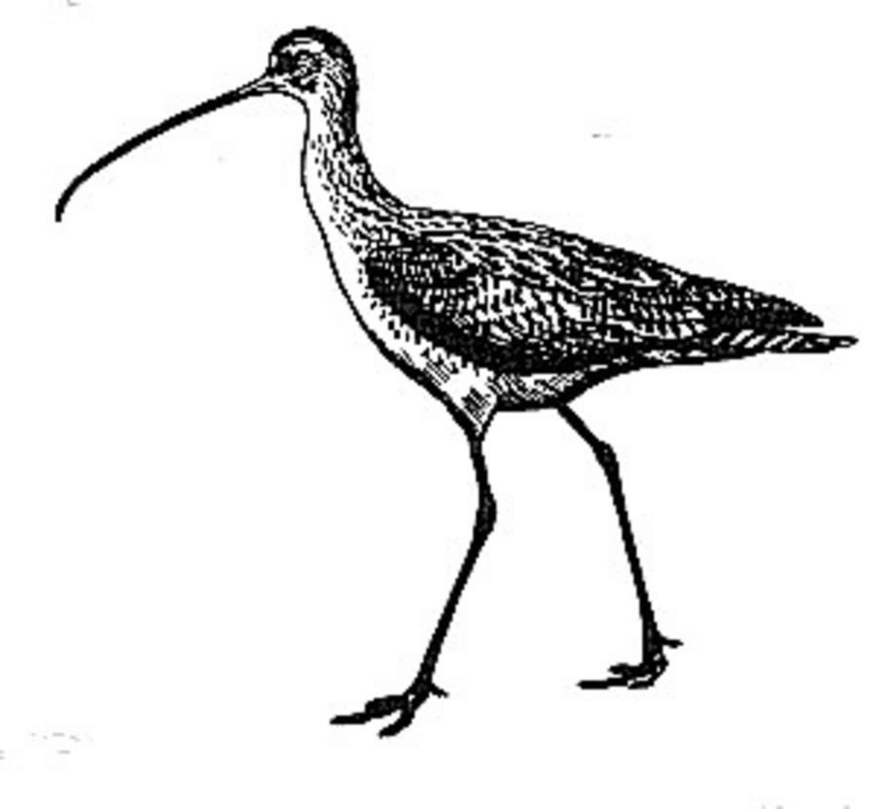 File Birds Line Art Draw