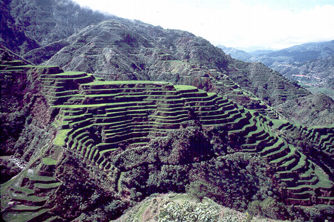 File:Rice terraces.png