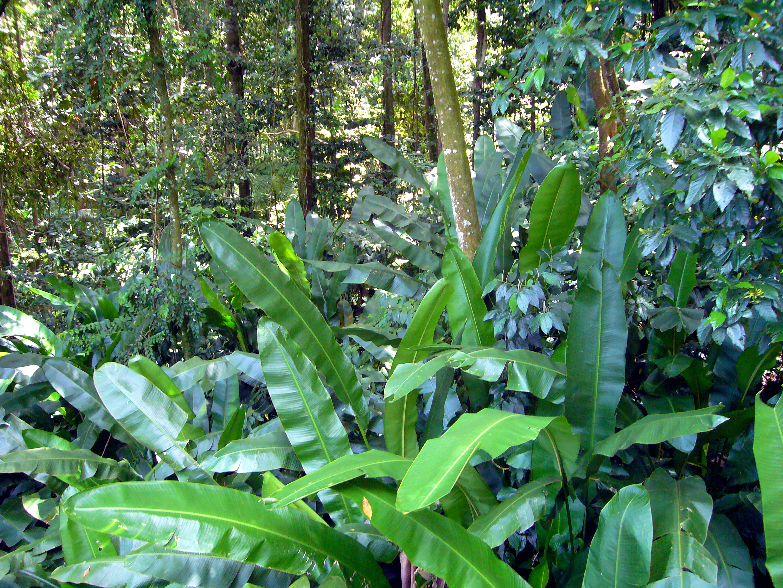 Rainforest Rainforest Description
