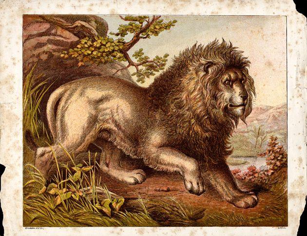 File:Vintage Lion Drawing.jpg