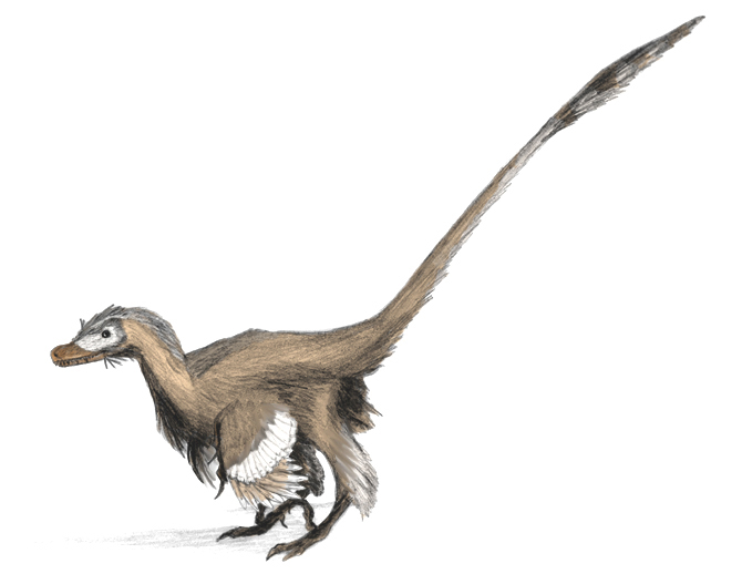 Velociraptor was only the size of a small dog