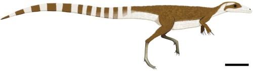 https://i1.wp.com/upload.wikimedia.org/wikipedia/commons/c/ce/Sinosauropteryx_color.jpg?resize=500%2C141&ssl=1
