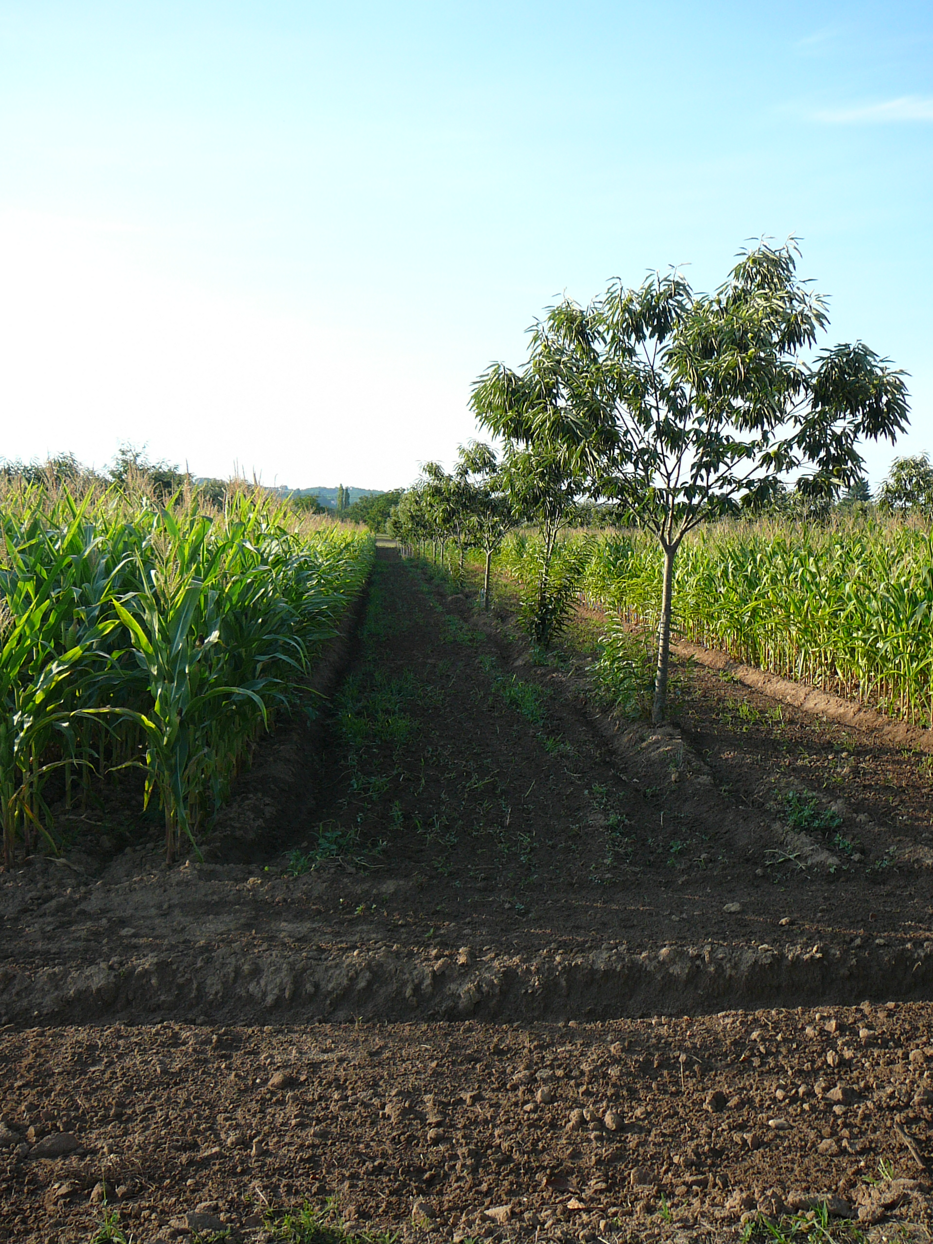 The most expensive was over $200 per acre. Agroforestry Wikipedia