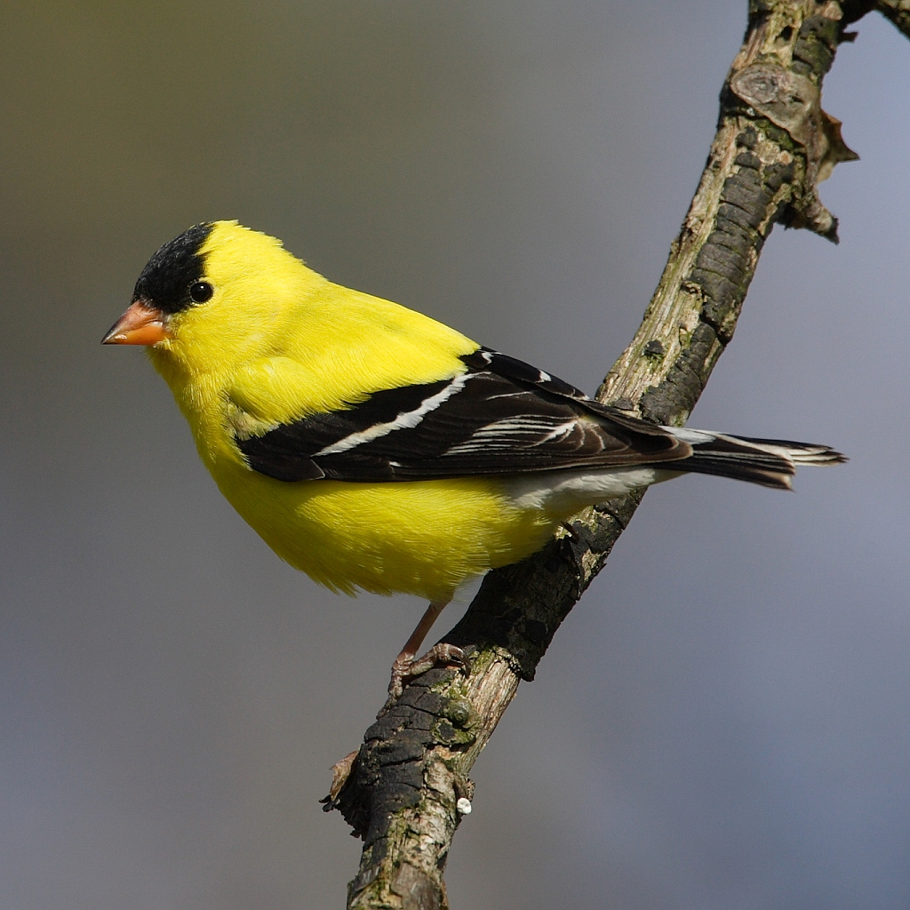 List Of Birds Of Washington State