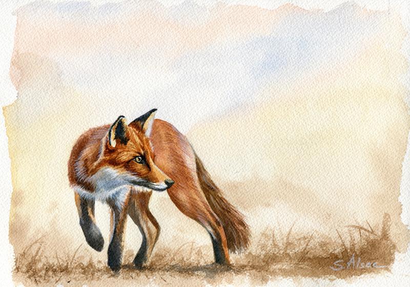 Le renard est aussi un nuisible !