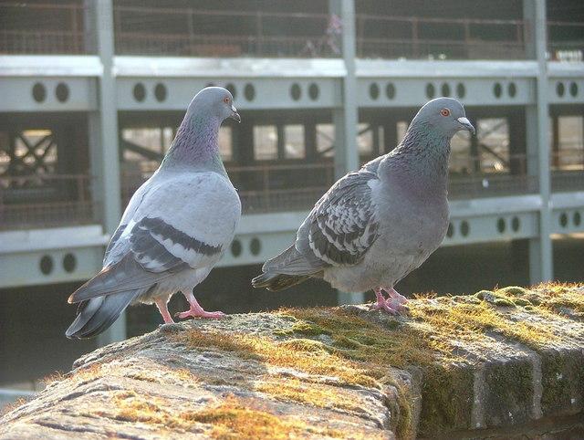 pr server les difices publics des pigeons le blog des r pulsifs anti rongeurs et anti insectes. Black Bedroom Furniture Sets. Home Design Ideas